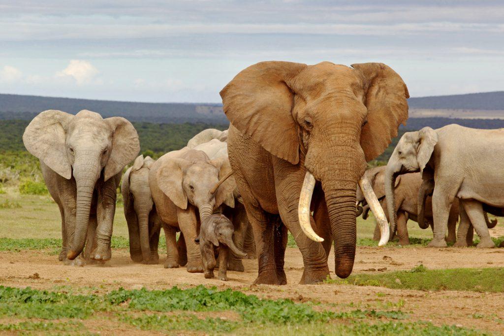 Estudiar en Sudafrica | Ver los elefantes